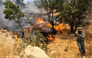 جنگل در آتش میسوزد چه کاری از ما بر میآید؟
