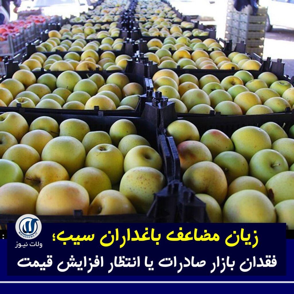 زیان مضاعف باغداران سیب؛ فقدان بازار صادرات یا انتظار افزایش قیمت